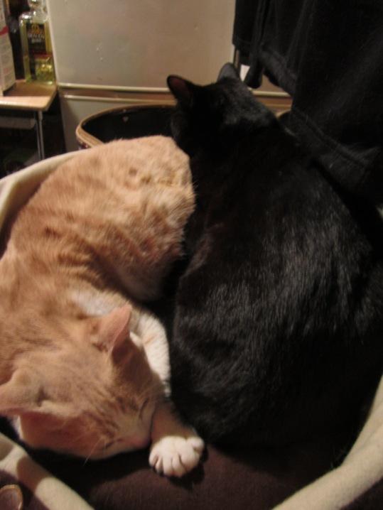 taichi cats