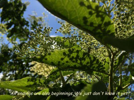 elderflower_quote