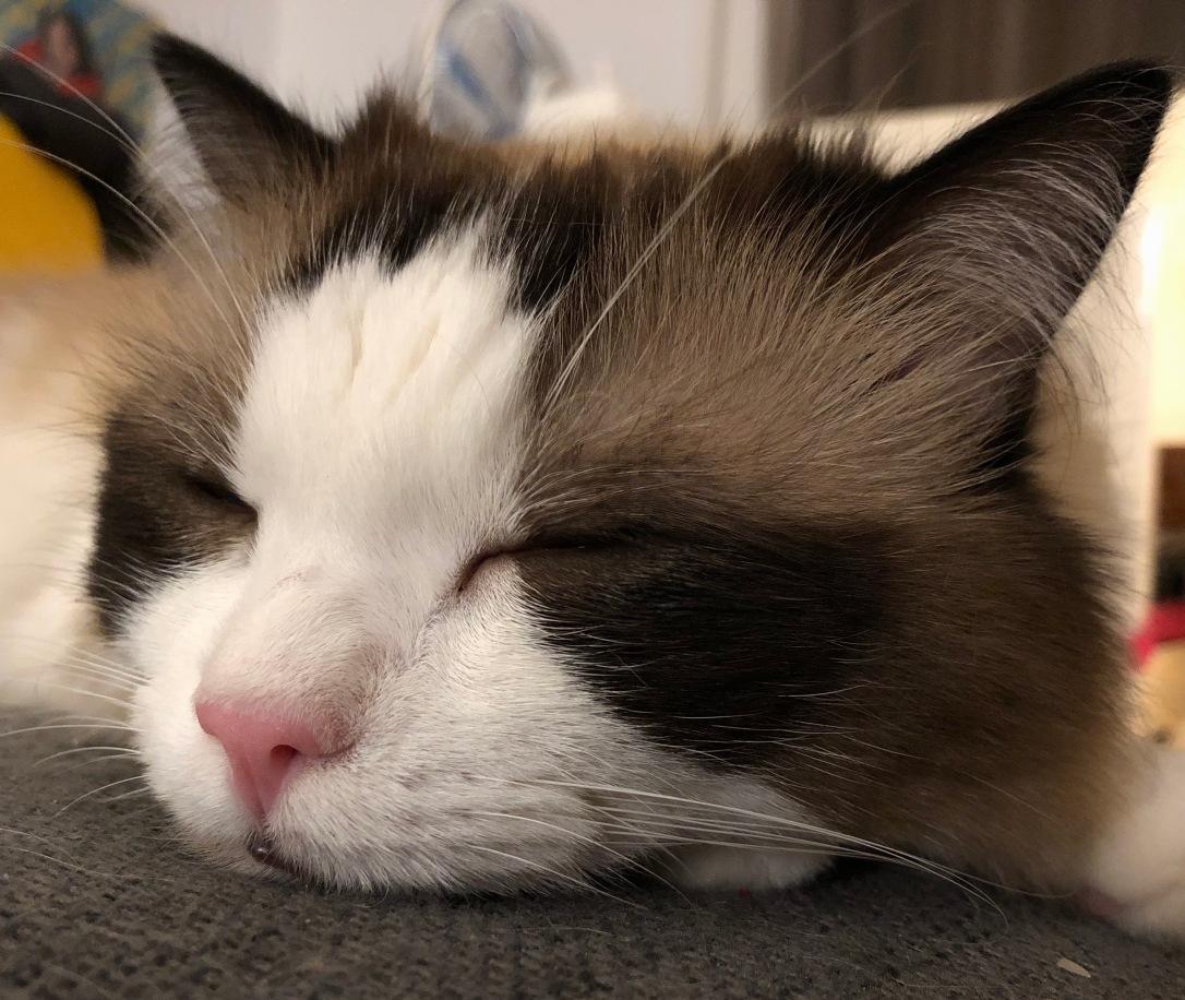 Billy resting